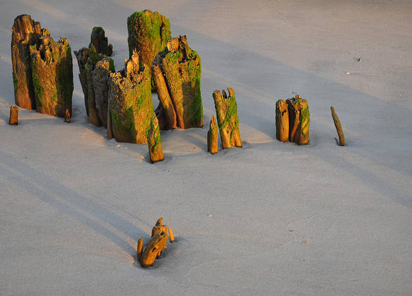 Photograph - Stumps On The Beach 1.4 by Bruce Gourley