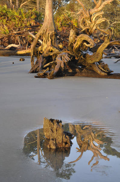 Photograph - Stumps On The Beach 1.5 by Bruce Gourley