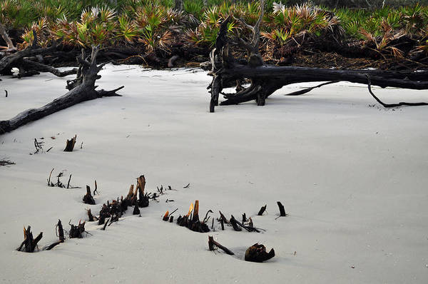 Photograph - Stumps On The Beach 1.6 by Bruce Gourley