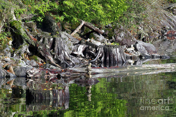Alouette Wall Art - Photograph - Stumps by Sharon Talson