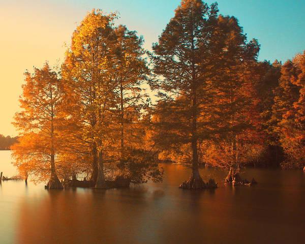 Photograph - Stumpy Sunset by Pete Federico