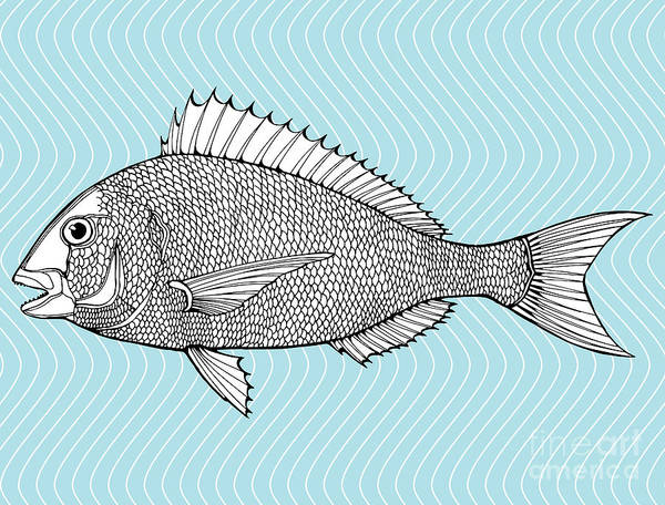 Wall Art - Digital Art - Stylized Fish. Sea Fish. Dorado. Black by In Art