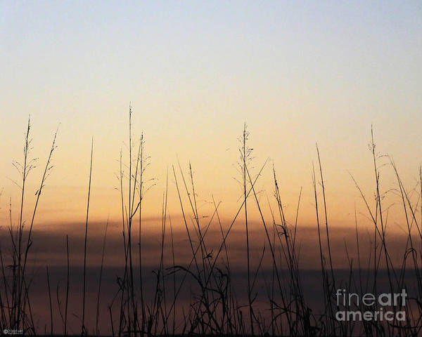 Photograph - Subdued Sunst Lacassine Nwr by Lizi Beard-Ward