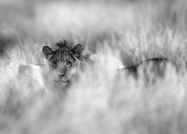 Wild Grass Photograph - Subtle Mane by Jaco Marx