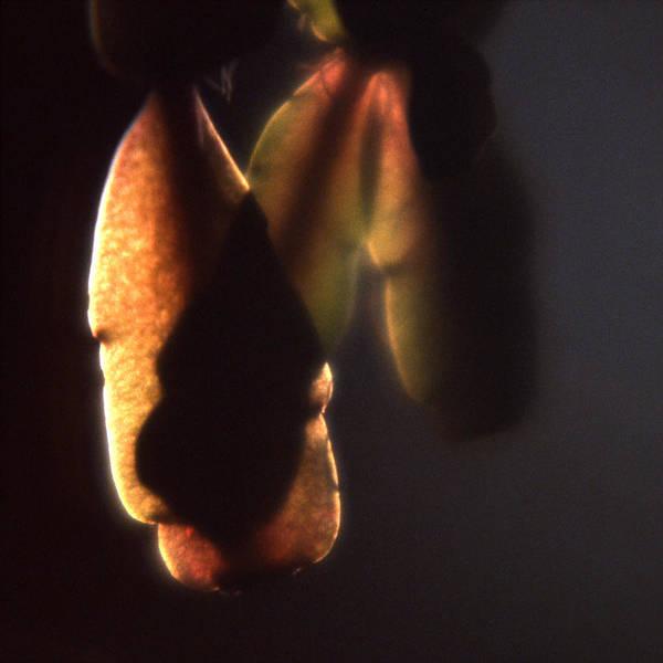 Photograph - Succulent 2 by Lee Santa