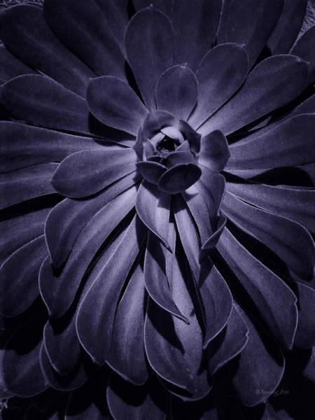 Photograph - Succulent 6 by Xueling Zou