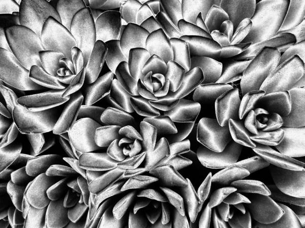 Photograph - Succulent Abstract by Rachel Cohen