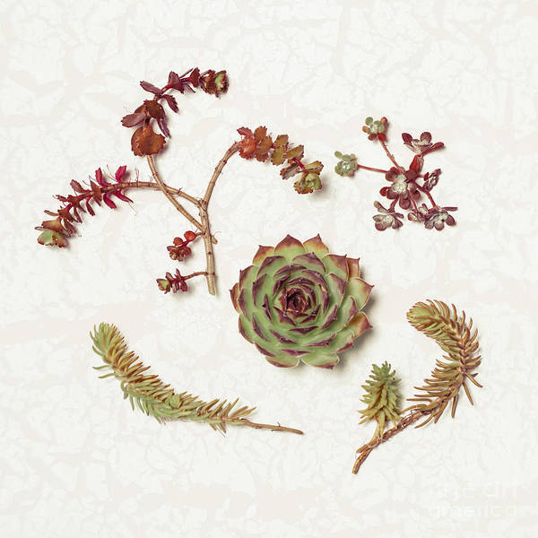 Wall Art - Photograph - Succulent Collection by Lucid Mood