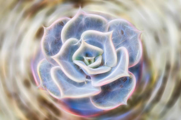 Photograph - Succulent Glow by Beth Sawickie