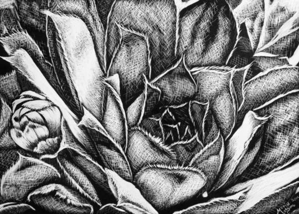 Drawing - Succulent by Monique Morin Matson