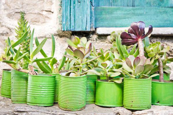 Arboretums Photograph - Succulent Plants by Tom Gowanlock