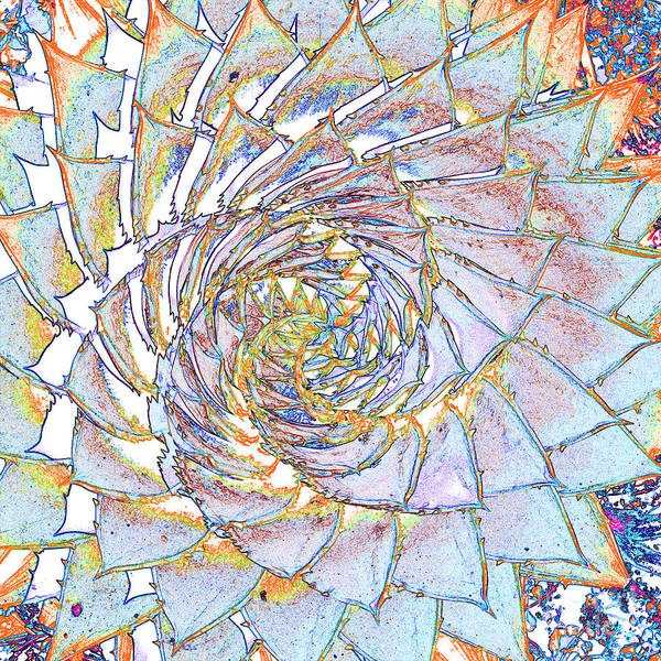 Photograph - Succulent Spiral No.1 by Tony Mills