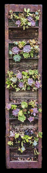 Digital Art - Succulents by Photographic Art by Russel Ray Photos