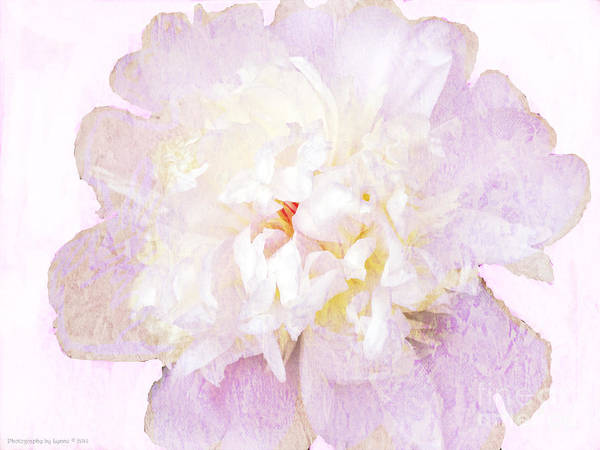 Photograph - Such A Pretty Peony by Gena Weiser