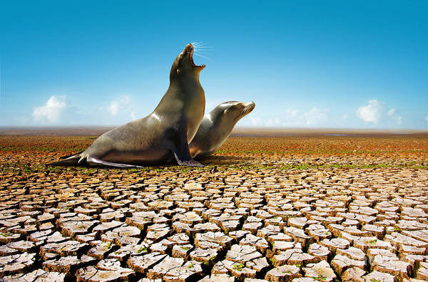 Arid Climate Wall Art - Photograph - Suffering Seals by Carlos Caetano