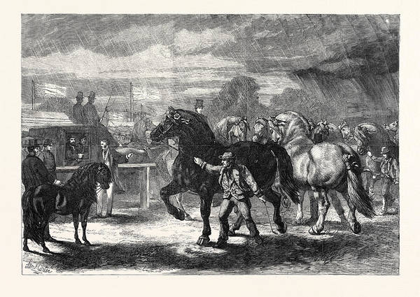 Bury St Edmunds Drawing - Suffolk Cart Horses At The Exhibition Of The Royal by English School