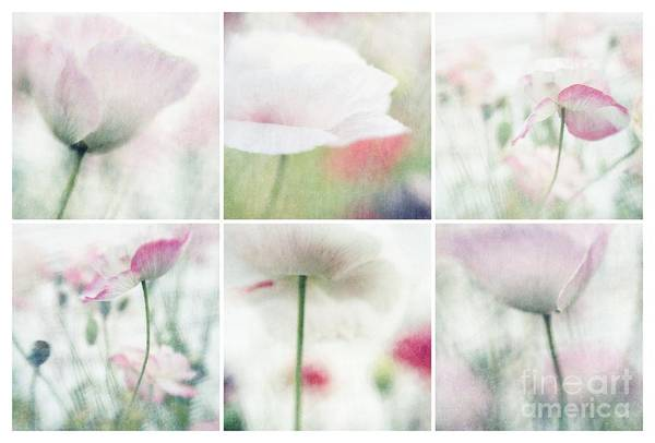 Airy Photograph - Suffused With Light Collage by Priska Wettstein