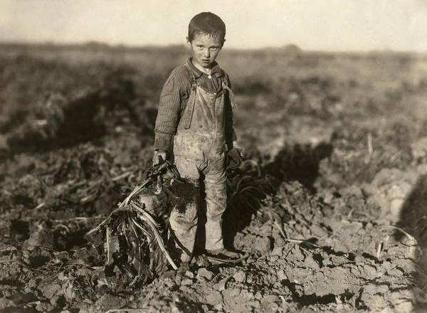 Wall Art - Photograph - Sugar Beet Worker, 1915 by Granger