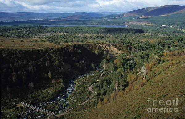 Photograph - Glenmore Forest - Cairngorm Mountains by Phil Banks