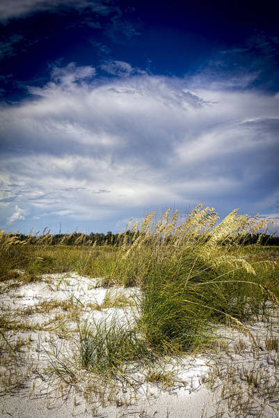 Wall Art - Photograph - Sugar Sand And Sea Oats by Marvin Spates