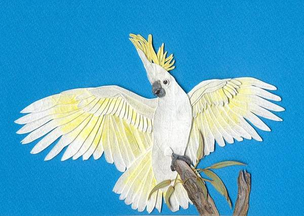 Blue Parrot Drawing - Sulphur Crested Cockatoo by Shirley Dawson