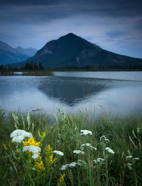 Wall Art - Photograph - Sulphur Mountain And Wildflowers by Cale Best