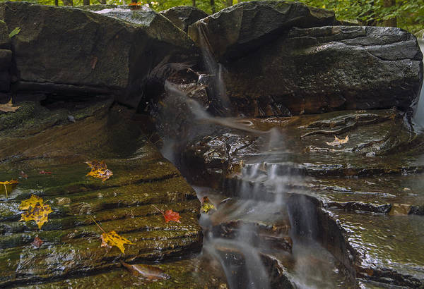 Photograph - Sulphur Springs Fall by Torrey McNeal
