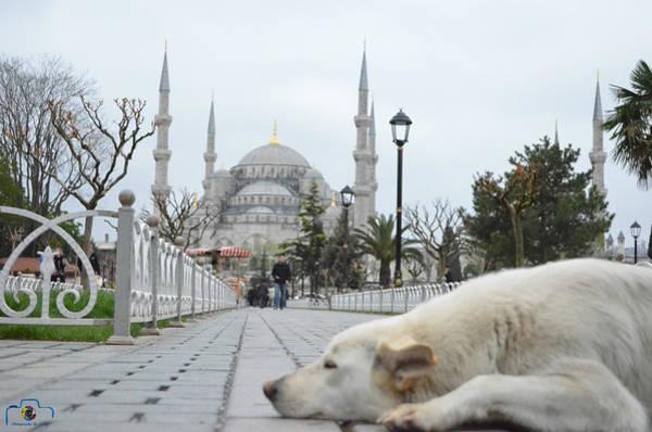 Sultan Ahmet Camii Wall Art - Photograph - Sultanahmet Mosque by Emrah  Duman