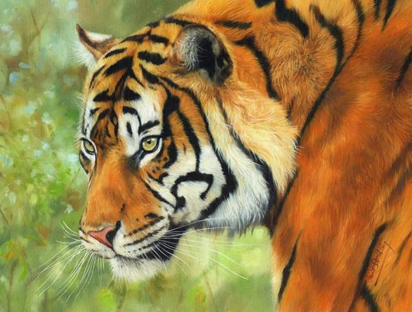 Bengal Tiger Painting - Sumatran Tiger 2 by David Stribbling
