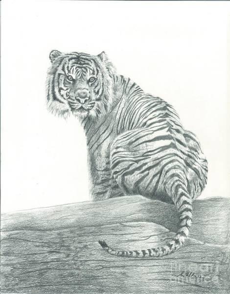 Sumatran Drawing - Sumatran Tiger by Sarah Bevard
