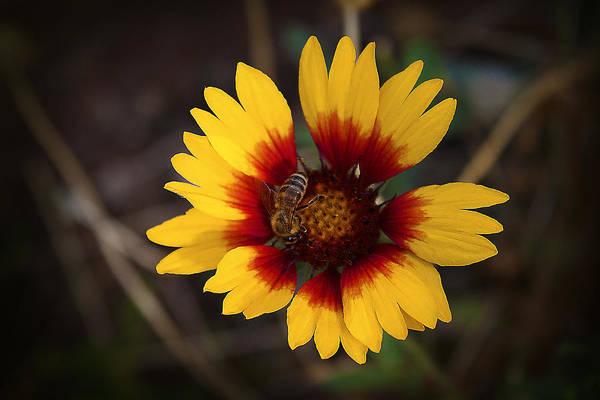 Photograph - Summer And Autumn by Milena Ilieva