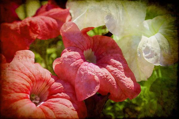 Photograph - Summer Art by Milena Ilieva
