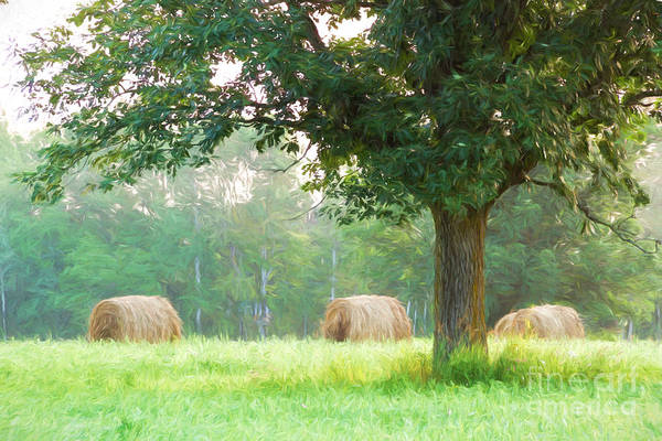 Photograph - Summer Bales by Lori Dobbs
