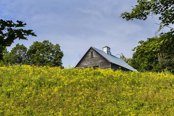 Photograph - Summer Barn by Tom Singleton