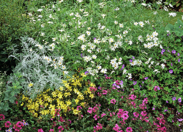 Wall Art - Photograph - Summer Border by Geoff Kidd/science Photo Library