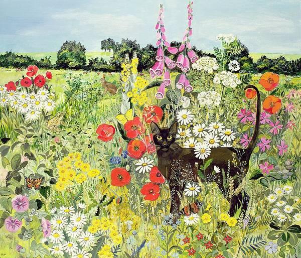 Foxglove Wall Art - Painting - Summer Cat by Hilary Jones
