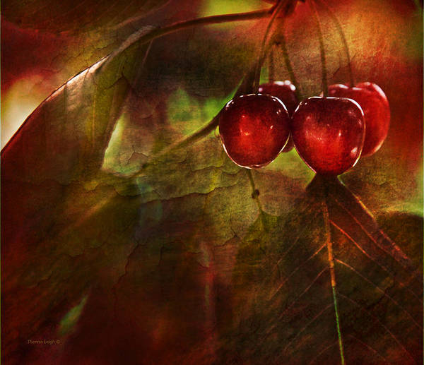 Cerise Photograph - Summer Cherries 2 by Theresa Tahara