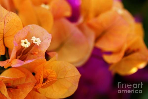 Photograph - Summer Color by David Birchall