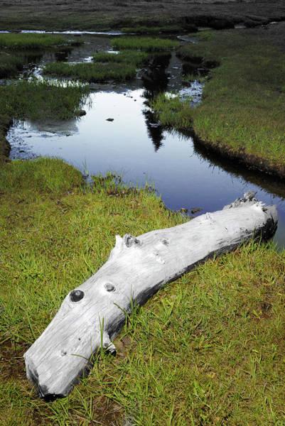 Photograph - Summer Creek by Arthur Fix