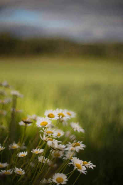 Canon Eos 6d Photograph - Summer Daisies by Jakub Sisak
