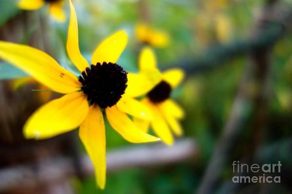 Photograph - Summer Daisy 1 by Jacqueline Athmann
