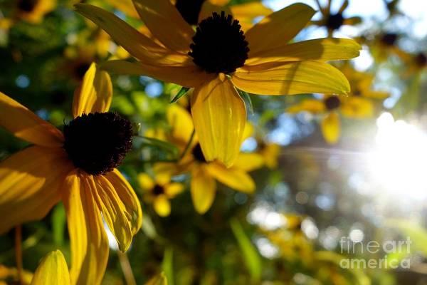 Photograph - Summer Daisy 2 by Jacqueline Athmann
