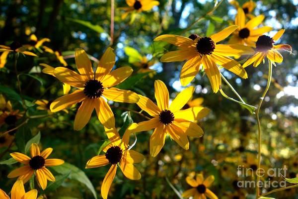 Photograph - Summer Daisy 3 by Jacqueline Athmann