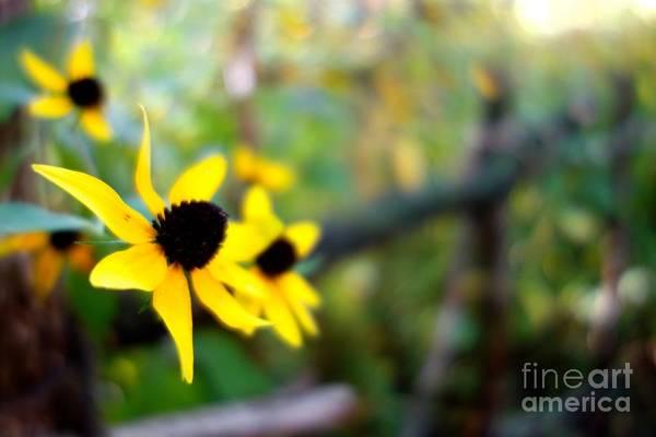 Photograph - Summer Daisy 4 by Jacqueline Athmann