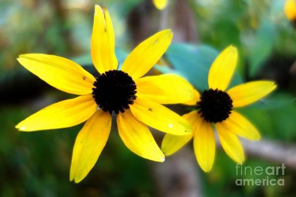 Photograph - Summer Daisy 5 by Jacqueline Athmann