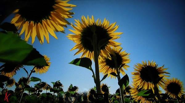 Photograph - Summer Field by Colette V Hera  Guggenheim