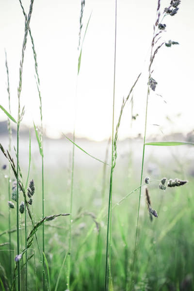 June Photograph - Summer Field by Lise Ulrich Fine Art Photography