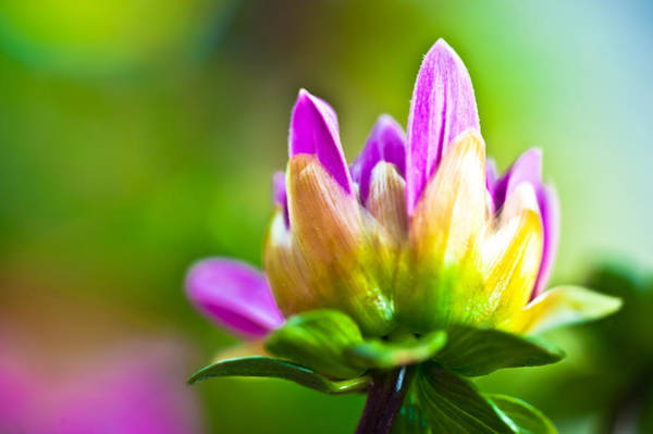 Photograph - Summer Fleur by Crystal Hoeveler