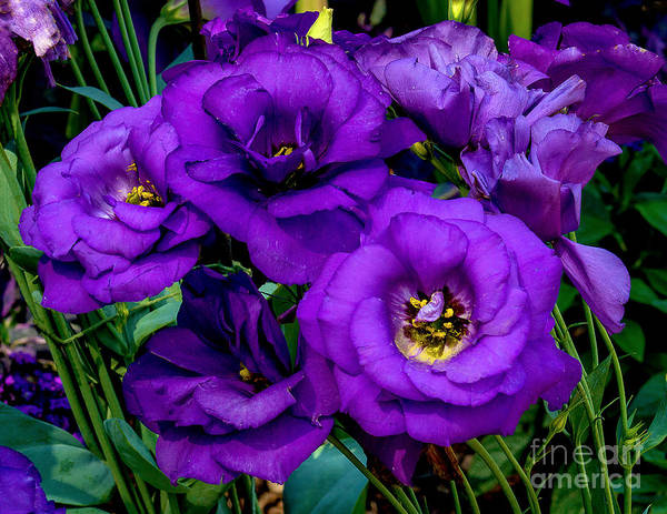 Wall Art - Photograph - Summer Flowers by Nick Zelinsky