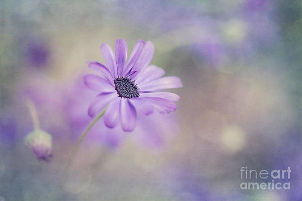Purple Haze Photograph - Summer Garden by Priska Wettstein